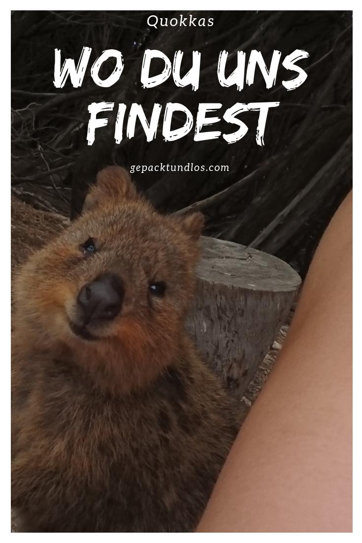 %23Tiere %23Australien %23Dezember %23RottnestIsland %23Westaustralien Rottnest Island aka Rotto in Westaustralien ist mein absoluter Lieblingsort Down Under. Erfahre hier warum und lass dich von Quokkas Bildern inspirieren....