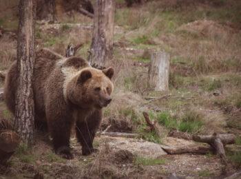 How-To: Wie du in Kanada garantiert vom Bären gejagt, angegriffen und gefressen wirst