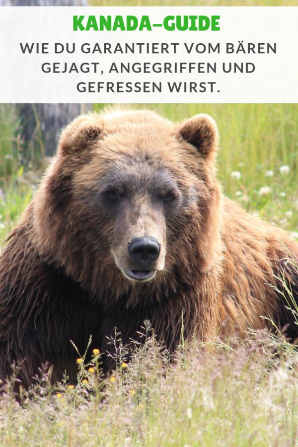 %23Wandern %23Kanada How-To: Wie du in Kanada garantiert vom Bären gejagt, angegriffen und gefressen wirst Einmal ein süßes Bärenjunges sehen? Oder einen Bären füttern und streicheln? Oder nur ein Foto von einem wilden Bären knipsen? Kanada ist dein Playground. In den Nationalparks Jasper, Banff und Yoho leben über eine halbe Millionen Bären. Erlebe einen unvergesslichen Roadtrip. Wenn du die nachfolgenden Tipps befolgst, ist deine Bären-Begegnung garantiert. Und vielleicht i...