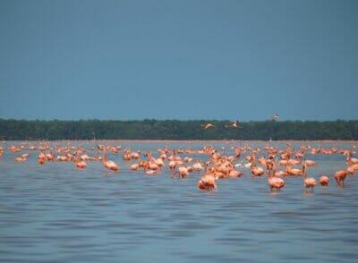 Celestún auf eigene Faust: Flamingos, Pelikane und Krokodile im Nationalpark