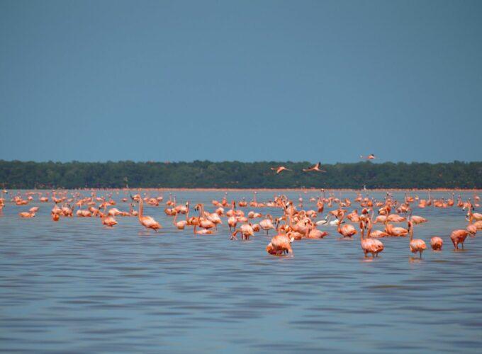 Celestún auf eigene Faust: Flamingos, Pelikane und Krokodile