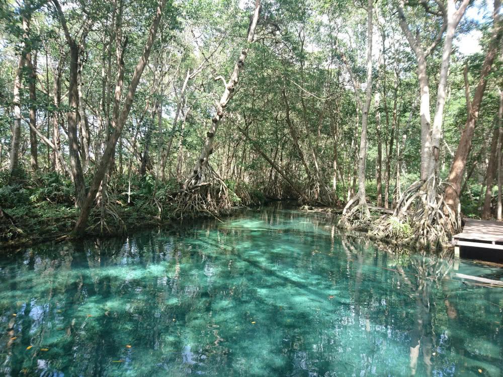 Mexiko Eine Süßwasserquelle zum Schwimmen gibt es auch in Celestun