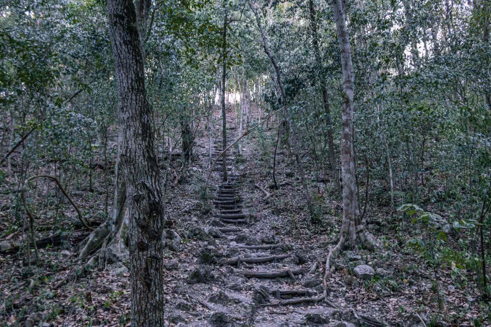 Guatemala El Mirador Manchmal ging es ziemlich steil hoch
