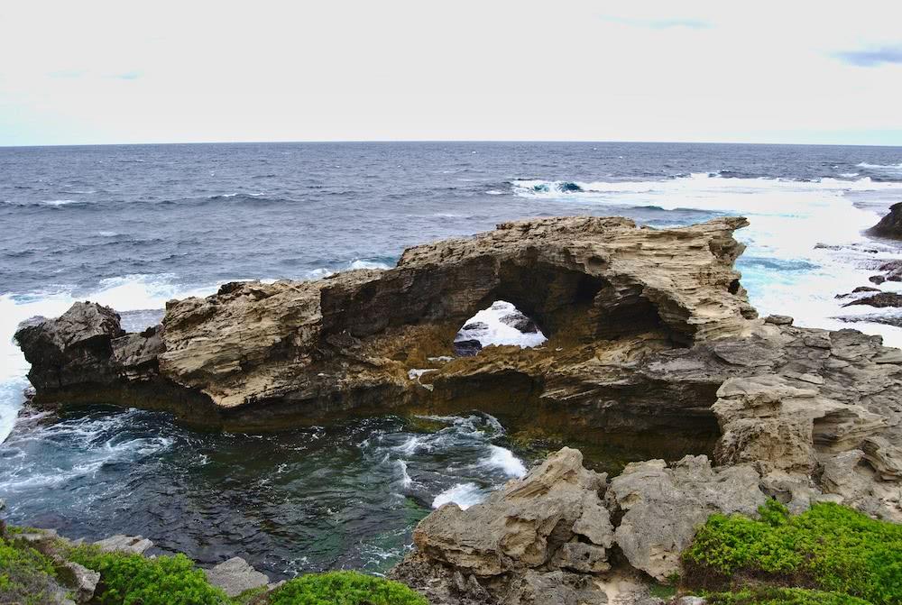 Lieblingsplätze: Quokkas!!! Und Rottnest Island 3