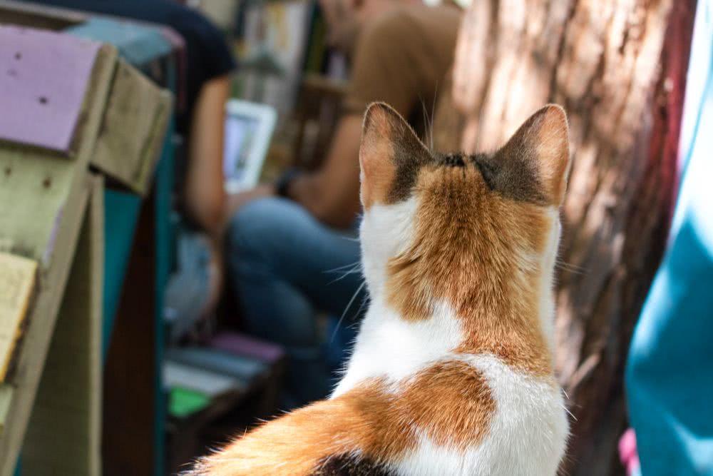 Bukarest Rumänien Katzencafé Miau