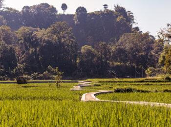 Indonesiens Inseln: Reiseführer und Route durch Sumatra, Java, Bali und Komodo