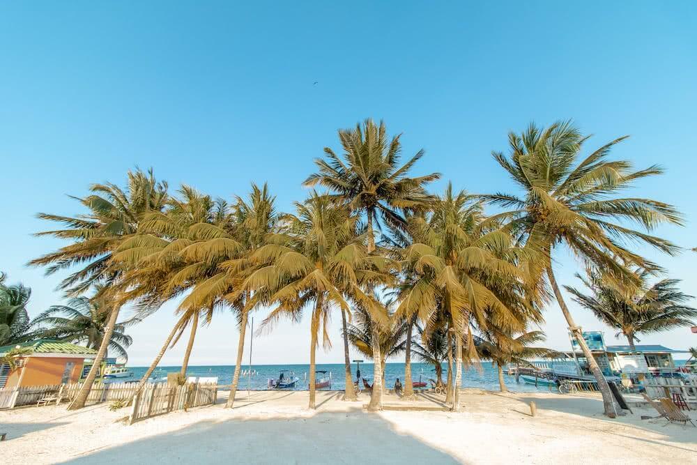 Weißer Sand und Palmen empfingen uns auf Caye Caulker.