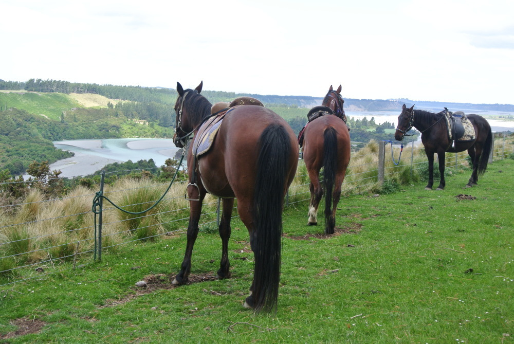 Unsere drei artigen Pferde auf dem Ausritt