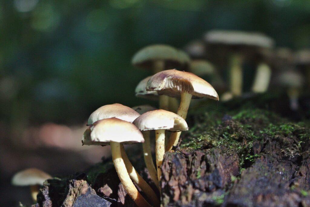 Ruhrgebiet Herbst Pilze in der Nähe der Essener Margaretenhöhe
