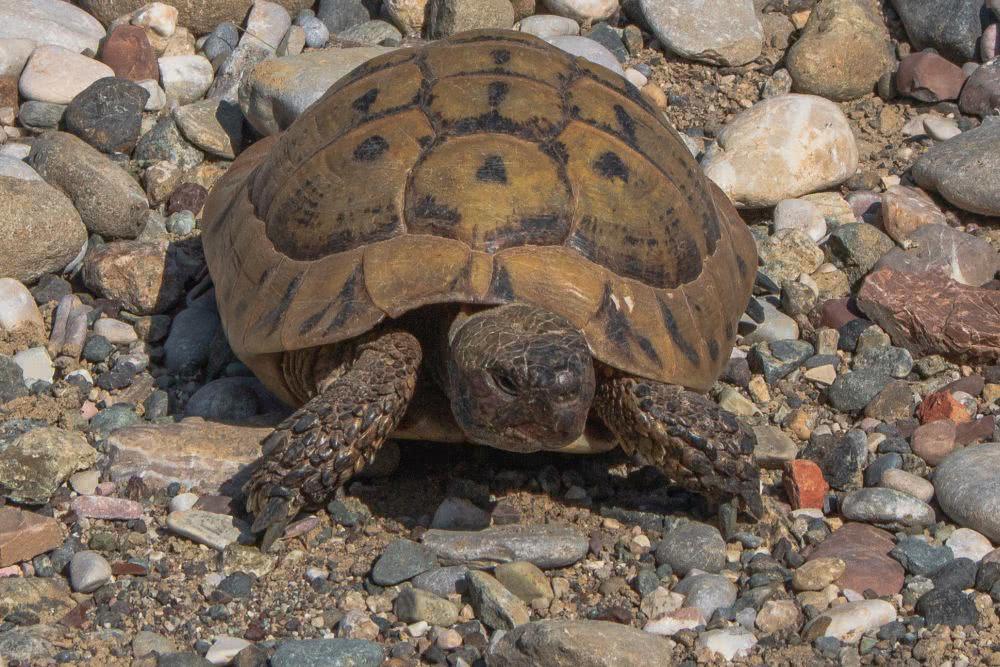 Griechenland Mehrere Schildkröten entdeckten wir auf unserer Wanderung