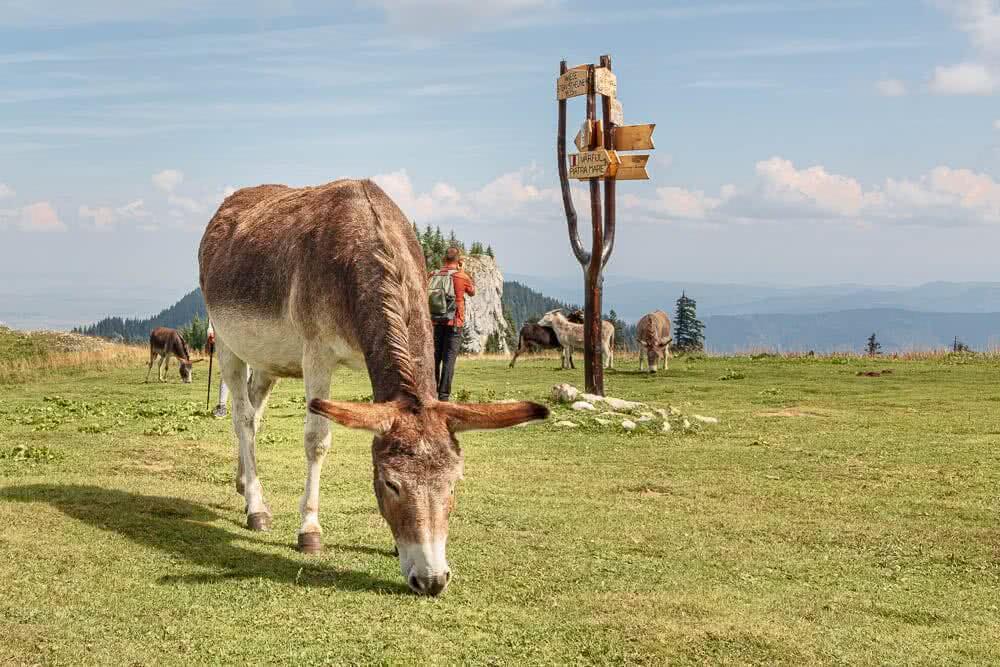 Europas schönste Reisefotos Eine anstrengende aber lohnenswerte Wanderung bei Brasov in Rumänien
