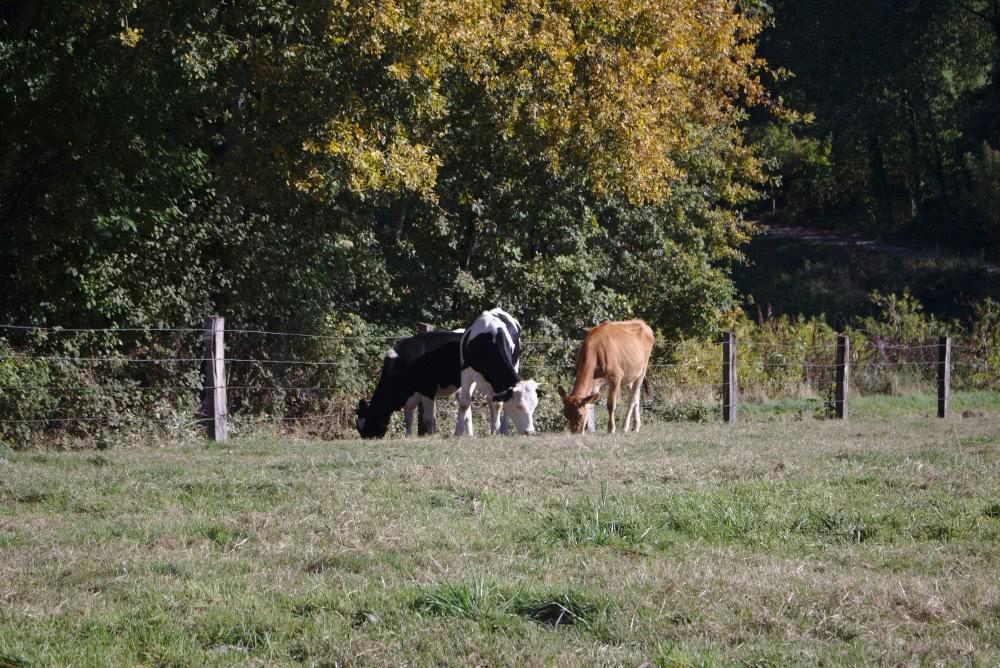 Man trifft am Baldeneysteig immer wieder auf Tiere entlang der Strecke.