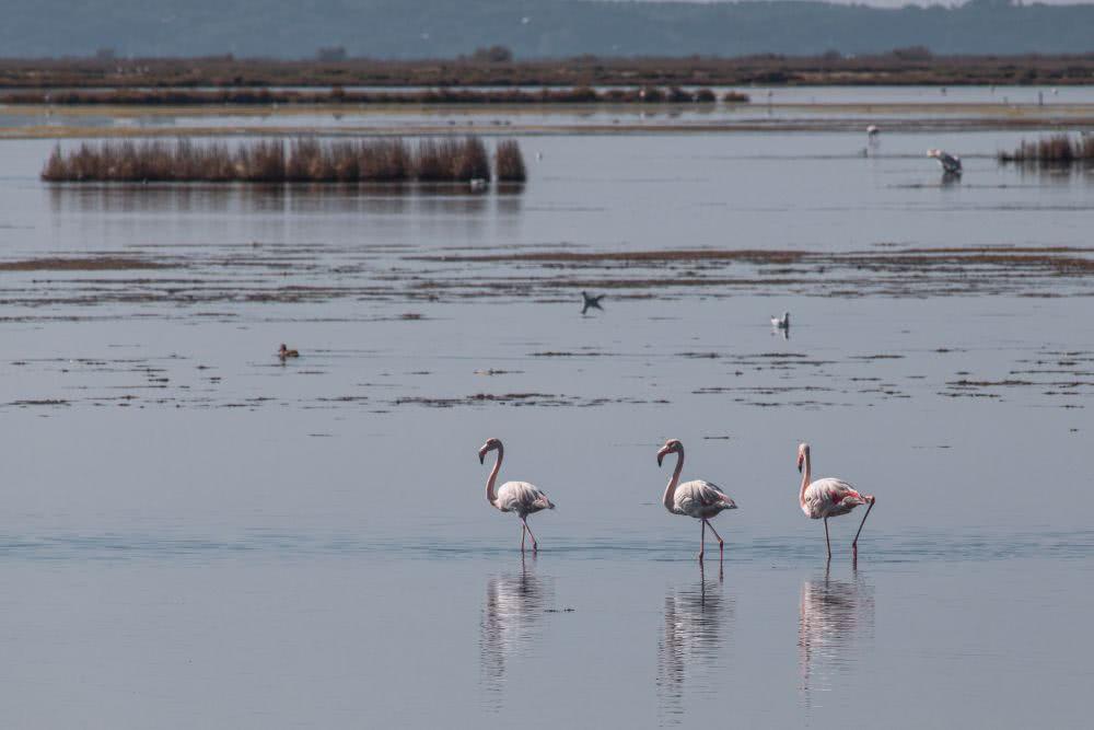 Ein paar Flamingos sahen wir in den Wetlands