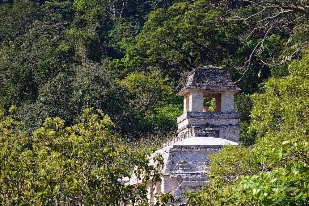 Eingebettet ins Grün des Waldes ragen die Ruinen hervor.