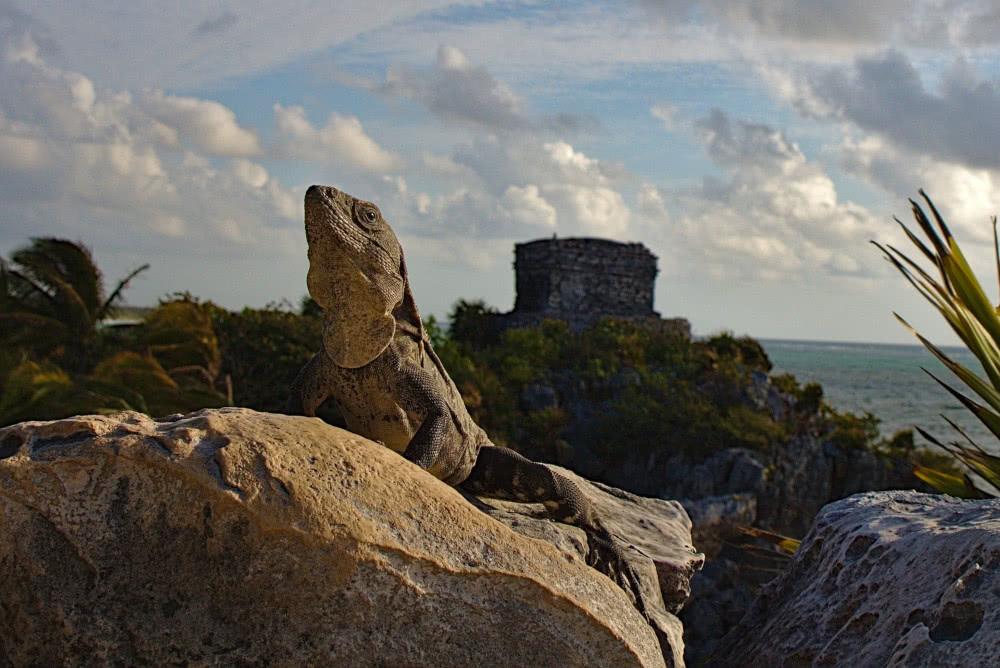 Von diesen Reptilien bekommt man auf dem Gelände der Ruinen einige zu Gesicht.