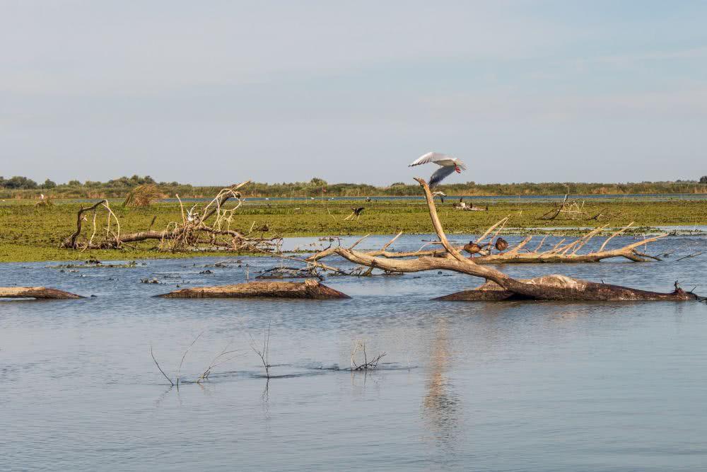 Das Naturerbe Donaudelta in Rumänien ist auch gleich Biosphärenreservat