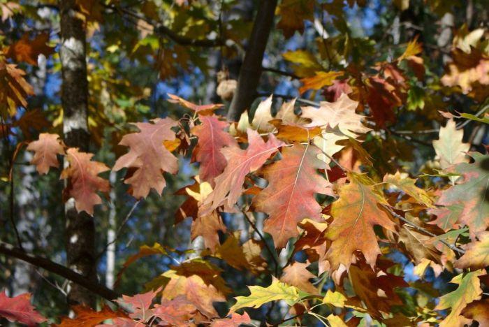 Herbstliches Ruhrgebiet