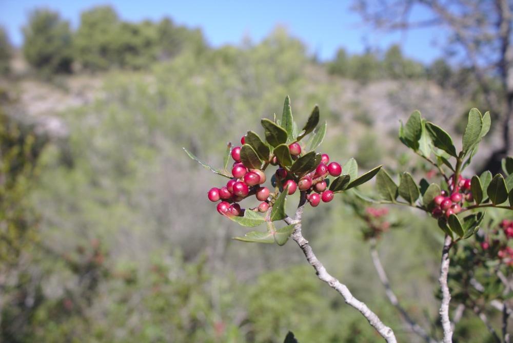 Mallorcas Pflanzenwelt beim Wandern