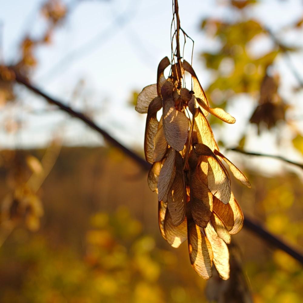 Der Herbst hinterlässt seine Spuren