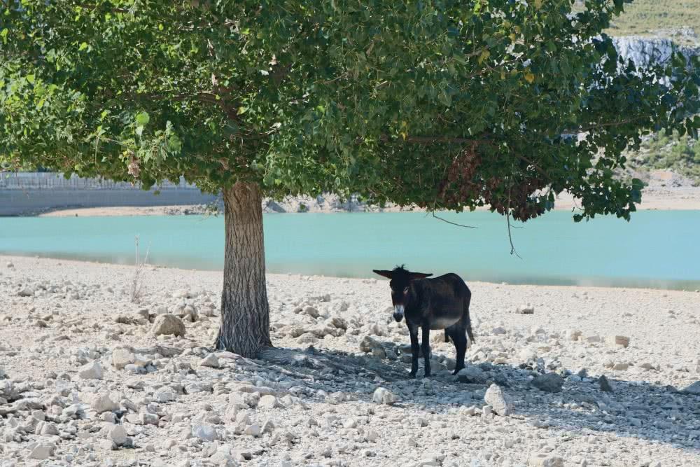 Einer von vielen Eseln am Cuber See