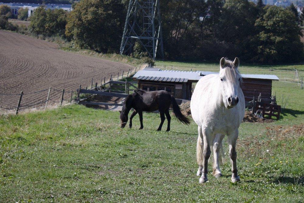 Pferde entlang des Wanderpfades