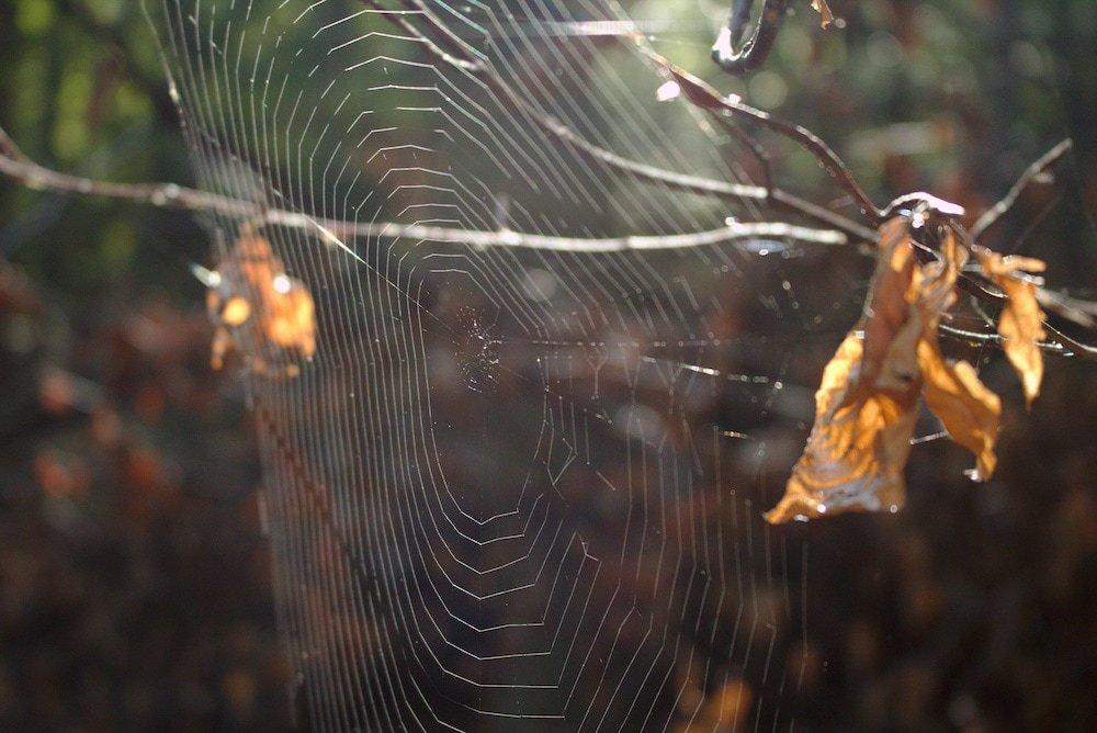 Spinnennetze im Herbst im sonnigen Licht
