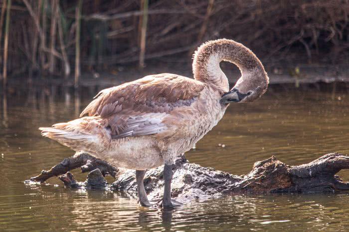 Einer von unzähligen Vogelarten im Biosphärereservat