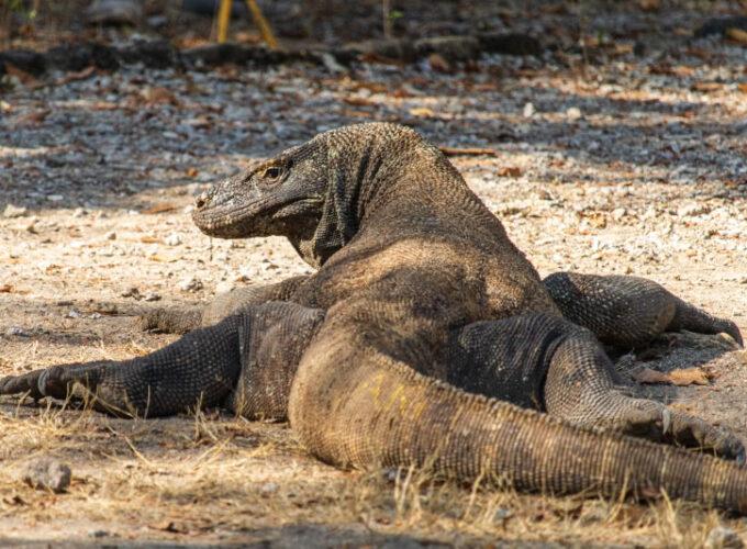 15 Fotos vom Komodo Nationalpark | Weltweit unterwegs