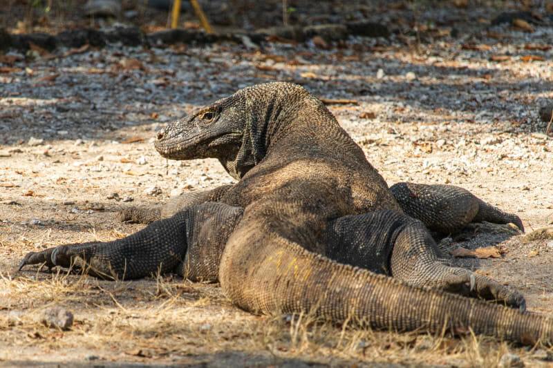 15 Fotos vom Komodo Nationalpark   Weltweit unterwegs