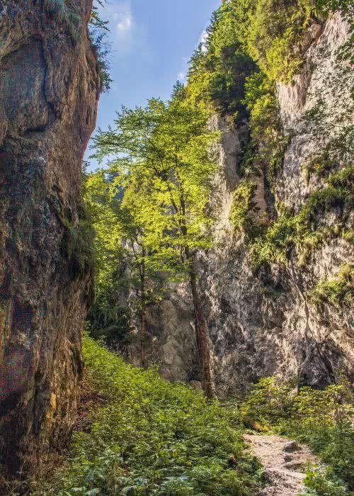 Nach der Schluchtwanderung (7 Ladders) geht es durch den Wald weiter
