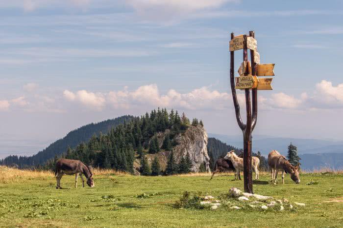 Als Belohnung warten ein paar Esel auf die Wanderer
