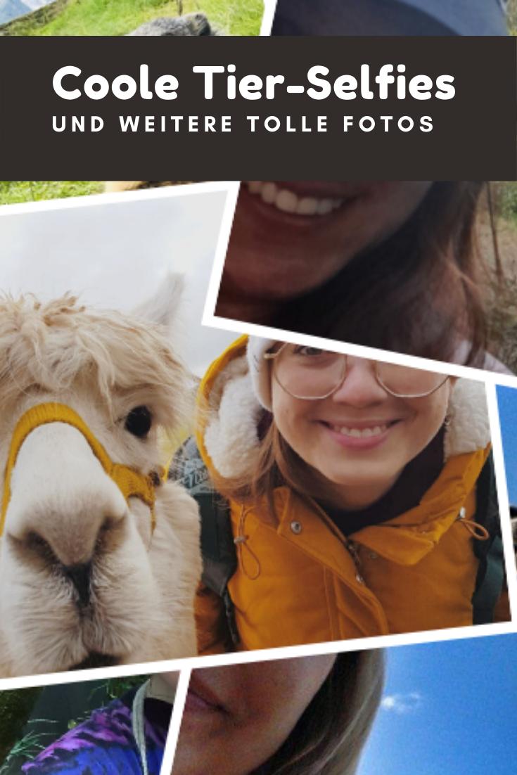%23Tiere %23VerschiedeneLänder %23Weltweit Die lustigsten Fotomotive entstehen, wenn Tiere Teil davon sind.  Manche Tiere sind prädestiniert, eine fotogene Pose einzunehmen. Vor allem wenn Mensch auch aufs Bild will. ;-) In diesem Beitrag zeigen Reiseblogger ihre coolen Fotos....