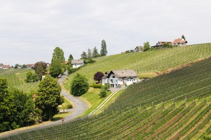 Spazieren & Wein in der Südoststeiermark
