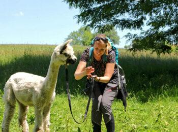 ÖSTERREICH: Alpaka Wanderung & Hofführung in der Nähe von Graz