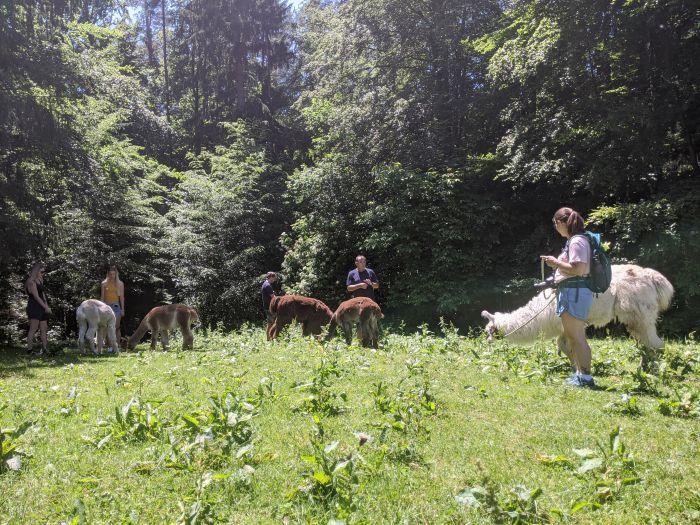 Wer spazieren kann, der kann auch rasten, und die Zeit mit dem Alpaka-Partner genießen