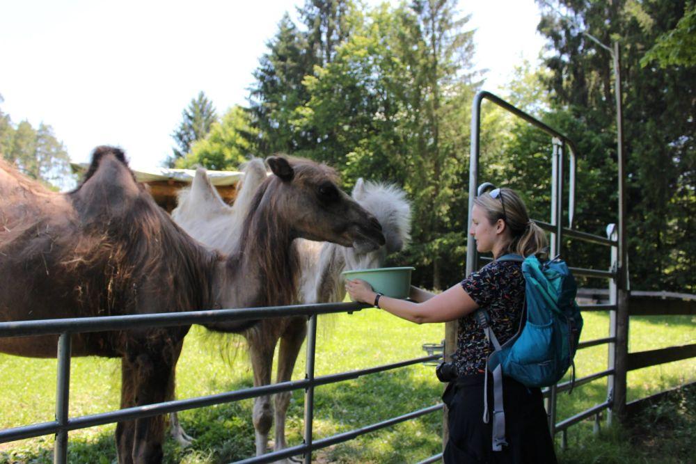 Auch die Kamele sind sehr beeindruckende Tiere und hungrig