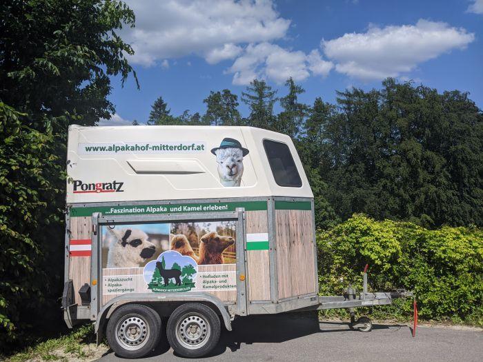 Wie  werden Alpakas eigentlich transportiert? So...