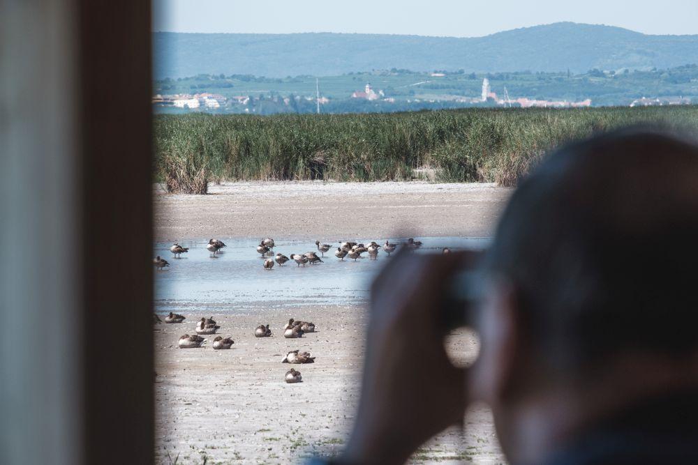 Den Birdwacht Point besuchten wir im Rahmen der Exkursion (Mittagszeit)