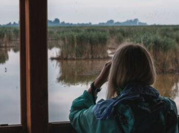 ÖSTERREICH: Neusiedler See: Aussichtspunkte & Tiere im Nationalpark