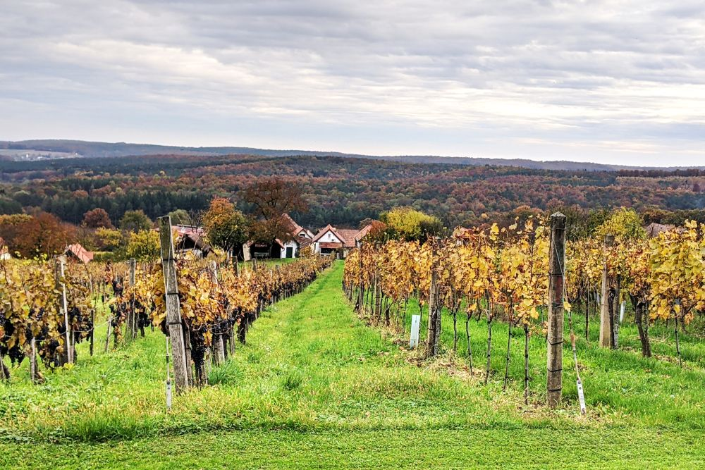Naturpark in der Weinidylle im Südburgenland als Ausflugsziel und für Kurzurlaube