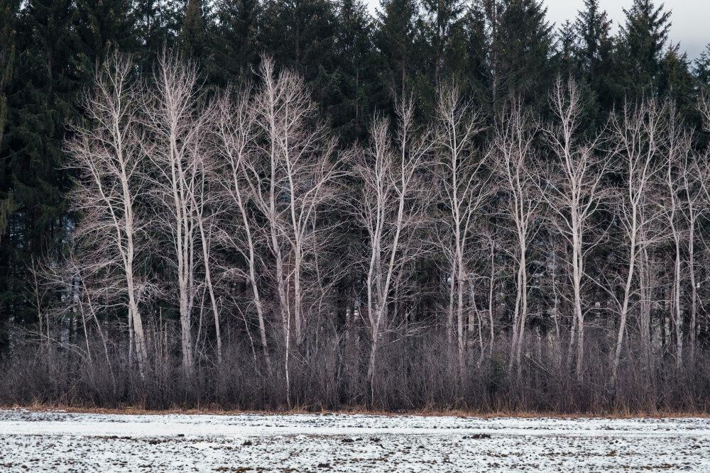 Spaziergang durch das Pürgschacher Moor im Winter
