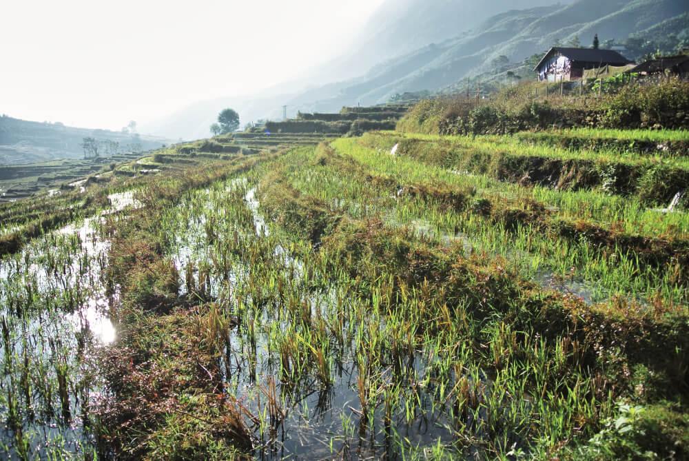 Das Landschaftsbild in Sapa ist durch Reisterrassen geprägt