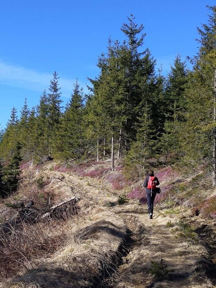 Wohl einer der blütenreichsten Wanderungen in der Steiermark im März