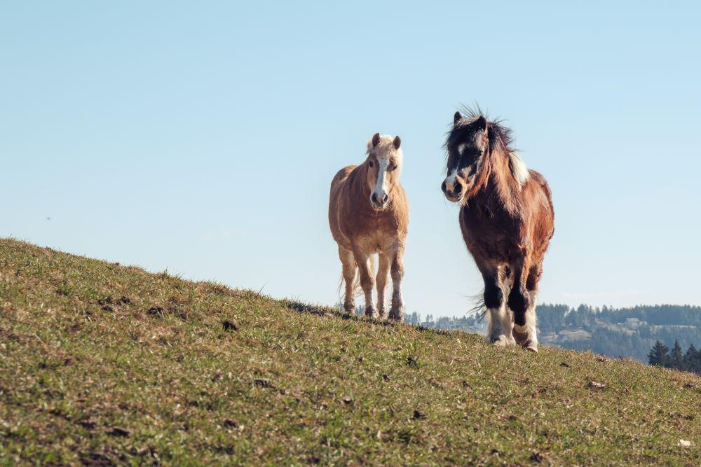 Auch andere Pferde sahen wir während der Wanderung