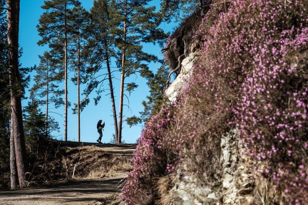 Am Wegesrand zieht sich das Blütenmeer entlang