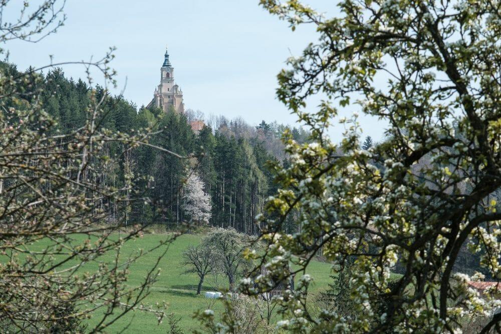 Pöllau Rundwanderung über Pöllauberg bis Masenberg | Wandern im Naturpark