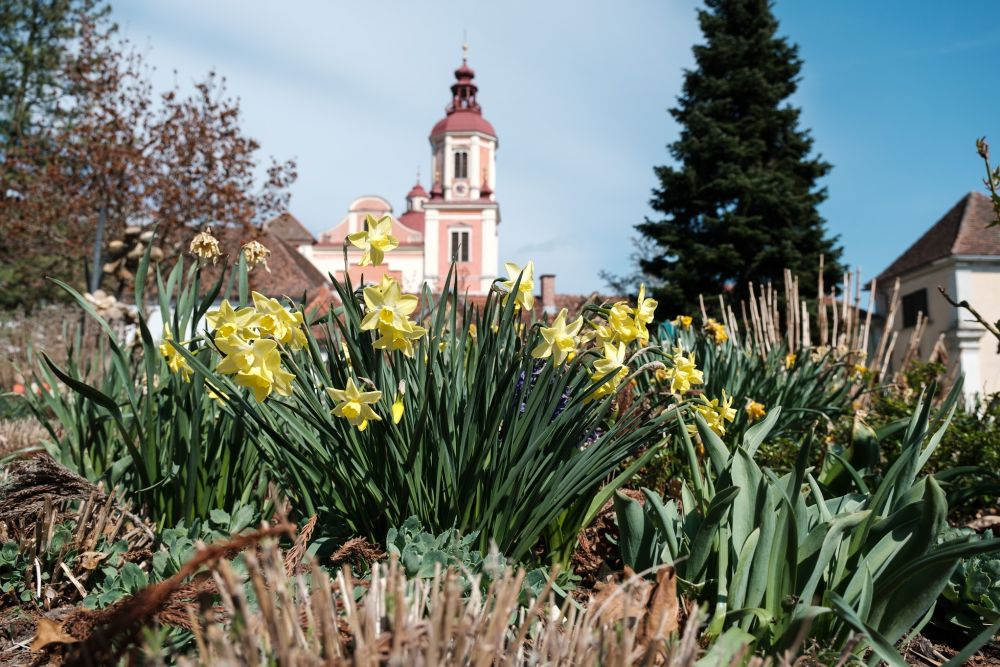 Bunte Blumen im Schlosspark Pöllau