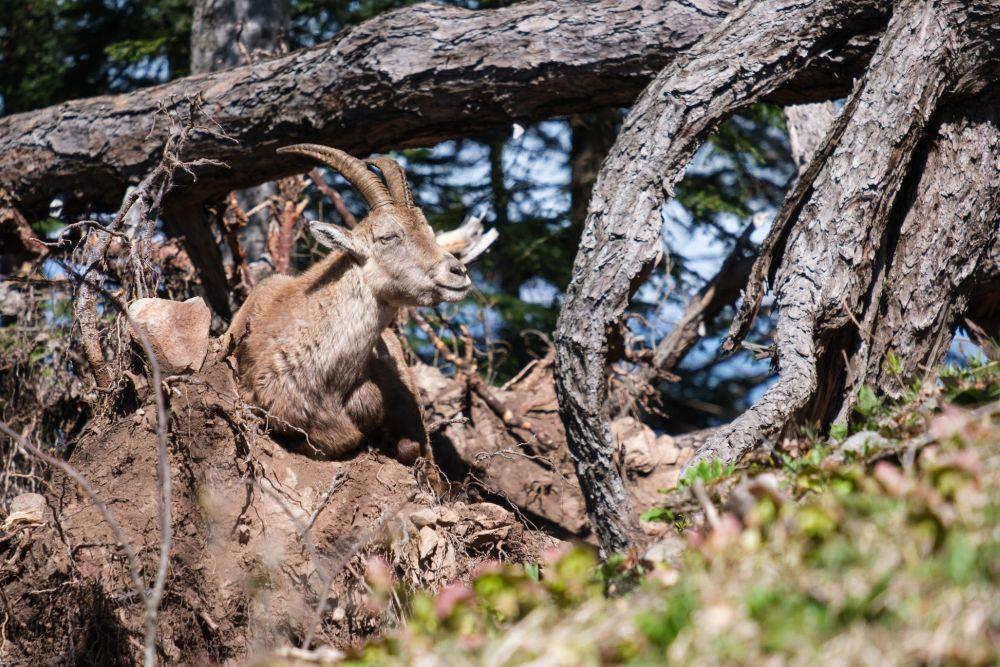 Will man Tiere in der Natur fotografieren, muss man die Kamera schnell in der Hand haben