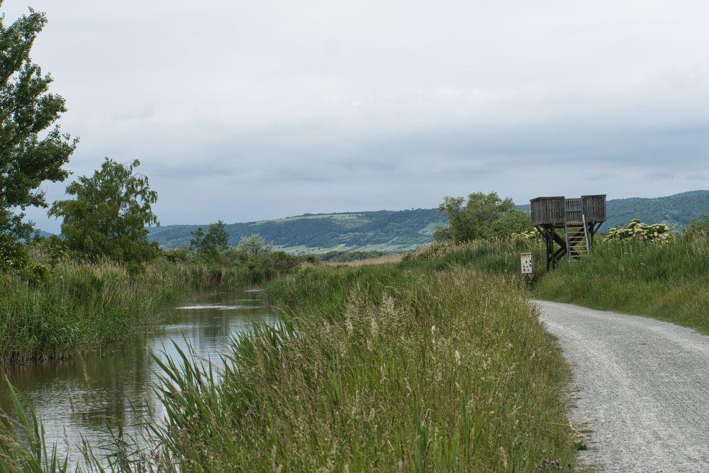 Der Schilflehrpfad in Purbach am Neusiedler See