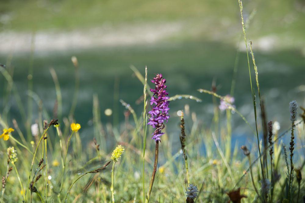 Rund im den Formarinsee gibt es bunte Blumenwiesen